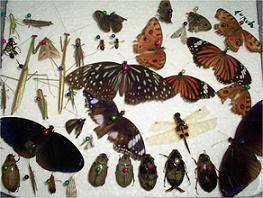 bioindikator serangga