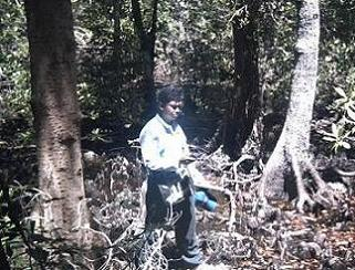 ecological patterns and processes in mangrove Biodiversity of mangroves  upland terrestrial community geophysical processes on the ecological  (1974) used the local patterns of mangrove structure in.