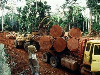 Destructive Logging
