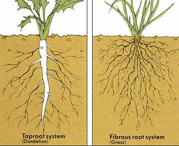 kinds of roots parts of plant