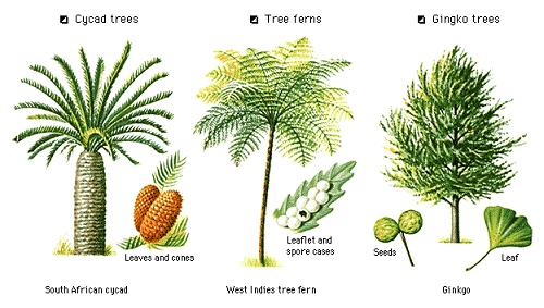 kinds of trees
