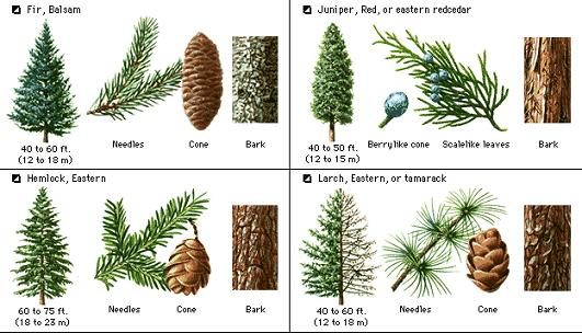 Kinds Of Trees 2